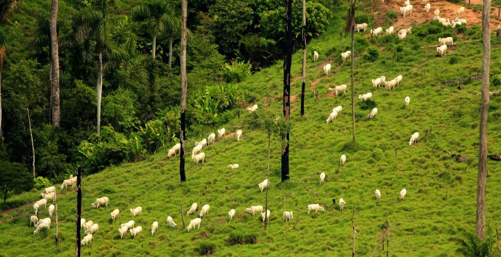 09 03 2008 CAMPANHA AMAZÔNIA SOJA E GADO. SOBREVOO SUL DO PARÁ / TERRA DO MEIO E NORTE DO MATO GROSSO. TRECHO MANAUS/ALTA ALTA FLORESTA/CUMARU/SANTA MARIA DAS BARREIRAS E SÃO FÉLIX DO XINGU/ PALMAS (TO). ARCO DO DESMATAMENTO. FOTO ALBERTO CÉSAR ARAÚJO