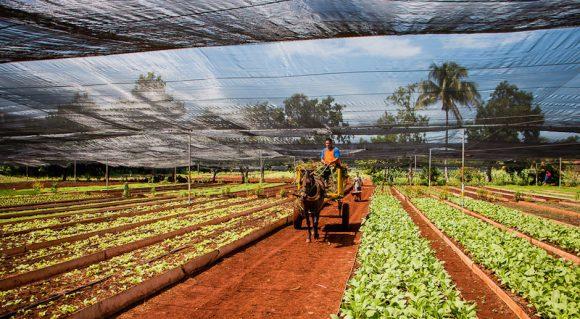 agricultura-organica-cuba-580x319