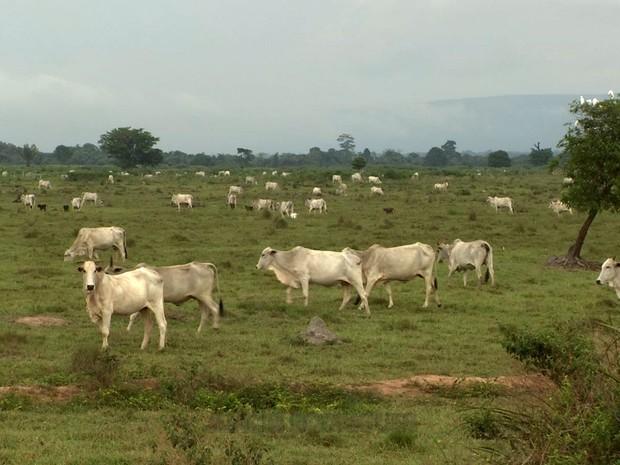Fazendas ficam dentro do Parque Estadual Serra Ricardo Franco (Foto: Reprodução/TVCA)