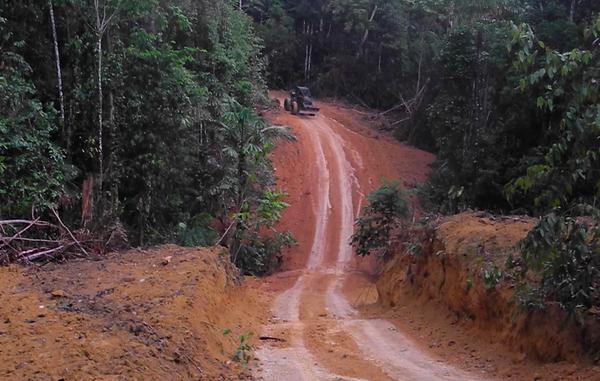 Madeireiros armados e fazendeiros poderosos estão destruindo a floresta dos Kawahiva. Reprodução Survival