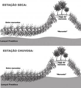 Projeto de lei em Goiás antecipa 'licenciamento flex' e retira proteção de campos essenciais ao Cerrado